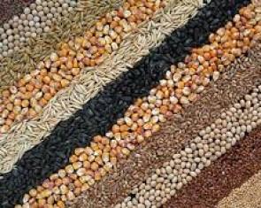 Зарубіжні насіння