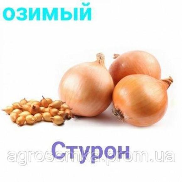 Цибулю севок Стурон Sturon озимий 1кг TOP 816