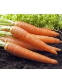 Морква Каротан 1г Rijk Zvaan