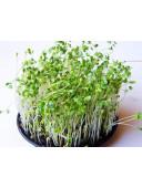 Мікрозелень Льон коричневий органічний 50г